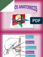 proyeccionesdelcraneo-140318230748-phpapp02.pdf