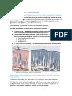 Paso2_Tejido epitelial.pdf