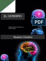 Cerebro Patricio