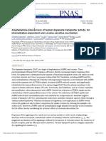 Amphetamine-Induced Loss of Human Dopamine Transporter Activity