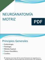 NEUROANATOMIA.ppt
