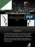 ANATOMIA LA MARCHA.pptx
