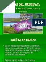 biomasdeluruguay- (2)