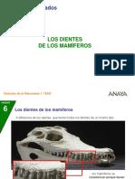 02 P Dientes Mamif 106