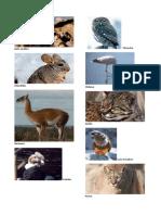 Animales en Peligro de Extincion-imprimir