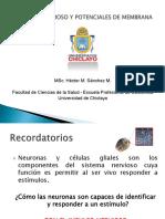 Fisioogía Sistema Nervioso