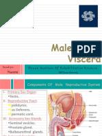 Malepelvisviscera 151115091016 Lva1 App6892
