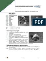 Separação Pigmentos fotossíntese
