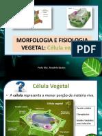 Composição Da Celula Vegetal - Rosi 1