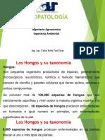 04 Hongos y Su Taxonomia 02-03-2019