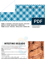 Amauta - Anatomía - Damián - Intestino Delgado, Grueso y Pancreas