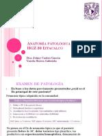 Exam de Patología