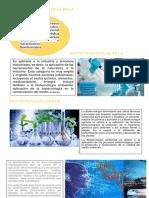 BIOTECNOLOGÍA ROJA.docx