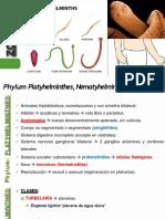 Phylum Platelmintos, Nematelmintos, Anélidos