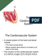 Ch 11 - Cardiovascular System
