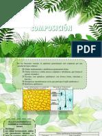 COMPOSICION EPIDERMIS.pptx