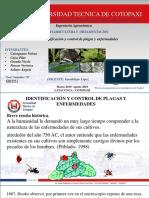 Plagas-y-enfermedades-GRUPO-1.pptx