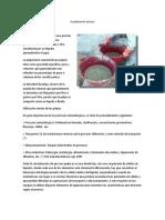Fundamento teorico flujo 2.docx