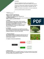 Plantas y Su Clasificacion