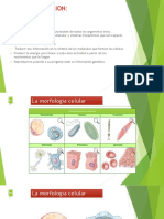Diapositivas Nutricion