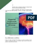 El Papel Del Cerebro en Las Manifestaciones Del Cuerpo