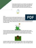 2019-1ciclo de Vida Las Plantas