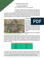 MAIZ Fertilización Fosforada