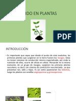 Tejidos en Las Plantas