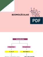 biomoléculas4