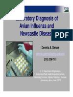 Lab Diagnosis of AI & ND-D.senne
