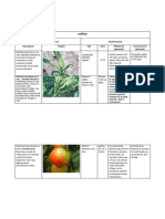 plan de fertilizacion.docx