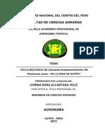 Alcantara Veliz.pdf