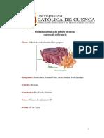 El retículo endoplasmático.docx