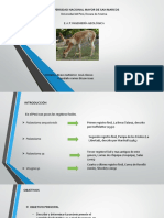 alpaca (1).pptx