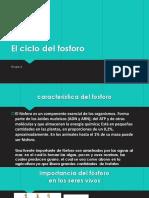 El_ciclo-.pptx
