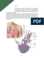 7. Sistema Respiratorio