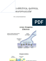 Sinapsis Eléctrica, Química, Neuromuscular