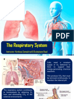 Chapter 9 the Respiratory System
