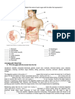 Digestive_System_organs_answers (4).docx