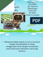hidroponik1-151221103739