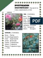 INVESTIGACION  BIOLOGIA.docx