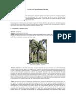 Generalidades Del Cultivo de La Palma Africana