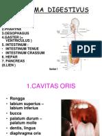digestive+UG biomedik I