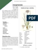 Allium Schoenoprasum - Wikipedia, La Enciclopedia Libre