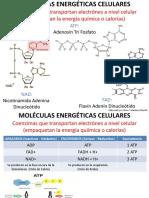 Diapositivas Metabolismo Celular y Organísimico