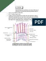 Anatomy Anal Canal