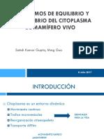 Mecanismo equilibrio citoplasma