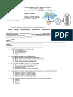 Evaluacion Biologia Primer Periodo Adn