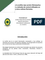 Generalidades de La Arañita Roja Carmín (T. cinnabarinus)