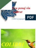 Păsări cu penaj viu colorat